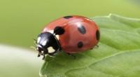 Algunos insectos causan terror, otros se ingieren en platillos exóticos y unos más son tan llamativos que son utilizados en dijes; lo cierto es que sin ellos se acabaría gran […]