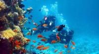 La UNESCO inscribió en la Lista de Patrimonio Mundial de la Humanidad al Archipiélago Revillagigedo, a raíz de que la Unión Internacional para la Naturaleza (UICN), aprobó la inscripción del […]