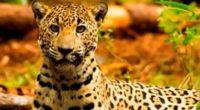 Durante el pasado XII Simposio el Jaguar Mexicano en el Siglo XXI: Consolidación de Políticas Públicas, Gerardo Ceballos,investigador de la Universidad Nacional Autónoma de México, explicó que todo está listo […]