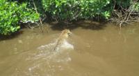 Personal de la Comisión Nacional de Áreas Naturales Protegidas (CONANP), en conjunto con los grupos ambientales comunitarios Amigos del Jaguar, Los Chorchos y de Conservación de Vida Silvestre y Desarrollo […]