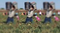 Ricardo Chávez G., Colaborador invitado Los jornaleros agrícolas, como trabajadores del campo, tienen diverso origen. Unos, como parte de las nuevas generaciones de jóvenes, provenientes de regiones del país, como […]