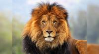 León Panthera leo Orden: Carnívora Familia: Felidae Después del tigre, es el mamífero de mayor tamaño en el mundo llegando a pesar hasta 250 kilos. Existe una marcada diferencia entre […]