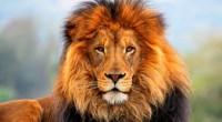 El León (Panthera leo), emblema del mundo animal, evocación de poder, valor y soberanía, en 20 años podría desaparecer de sitios como África Occidental, y cada vez habrá menos en […]