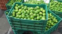 José Manuel López Castro Luis E. Velasco Yépez CAMPO Y DESARROLLO En los últimos días, tres productos agropecuarios han causado revuelo: limón, cebolla y huevo. En el caso del cítrico, […]