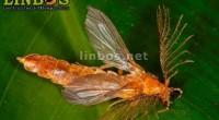 """Se dio a conocer que la UNAM desarrolla el proyecto """"LINBOS, Los Insectos del Bosque Seco"""", estudio desarrollado por expertos del Instituto de Biología (IB) de esta universidad, y que […]"""