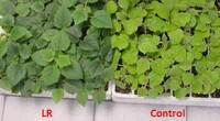 El Consejo Nacional de Ciencia y Tecnología (Conacyt) dio a conocer que para proteger las plantas contra el excesivo calor debido al Cambio Climático y, en diversas regiones, de las […]