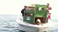 El 4 de Octubre de 2013, dos lobos marinos juveniles (Zalophus californianus) especie listada bajo protección especial en la NOM 059- 2010 fueron reintroducidos exitosamente a su hábitat natural en […]