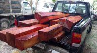 Al no acreditarse la legal procedencia de 24 metros cúbicos de madera de Cedro Rojo y Caoba, la Procuraduría Federal de Protección al Ambiente (PROFEPA) inició procedimientos administrativos en dos […]