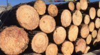 La Procuraduría Federal de Protección al Ambiente (PROFEPA) aseguró de manera precautoria 58 m3 de madera (equivalentes a 58 toneladas), como resultado de un megaoperativo forestal en la Delegación de […]