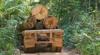 Con la reciente legislación para utilizar sólo madera certificada en la elaboración de insumos, el estado de Durango y Puebla, refrendaron su compromiso por conservar los bosques y sus servicios […]