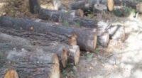 La Procuraduría Federal de Protección al Ambiente (PROFEPA) aseguró 1,037 trozas de madera de pino, con un volumen total de 114m³, en el ejido Molinares, municipio de Carichí, Chihuahua, debido […]