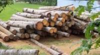 El gobierno mexicano tiene la meta de duplicar la producción anual de madera, y pasar de los 5.5 millones de metros cúbicos actuales a 11 millones al término de la […]
