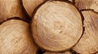 Diez ejidos y comunidades ubicados en cinco estados de la República unieron sus esfuerzos y presentan la primera comercializadora de madera certificada FSC, Integradora ECOFORCE, ubicada en la Ciudad de […]