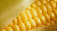 Desde hace muchos años se ha informado que los cereales son una buena fuente de vitaminas, algunos minerales y carbohidratos. Ahora, diversos estudios señalan que los cereales enteros, es decir, […]