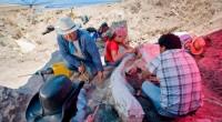 Los restos óseos de un mamut de más de 10,000 años de antigüedad, localizados el año pasado en el municipio queretano de Huimilpan, serán sometidos a minuciosas labores de conservación; […]