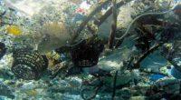 La basura que se arroja a los mares afecta negativamente a más de 800 especies animales y causan serias pérdidas para las economías de muchos países , indica un nuevo […]