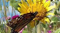 Científicos mexicanos, acompañados por 80 estudiantes, inauguraron este martes el Mes de las Mariposas Monarca en el Mariposario del Zoológico de Chapultepec para dar a conocer la importancia de la […]