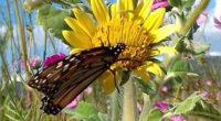 Preciosas y principales polinizadoras, las mariposas, junto con las abejas, son insectos de importancia fundamental para mantener el equilibrio de los ecosistemas naturales. Desgraciadamente, la supervivencia de estas hermosas criaturas […]