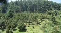 La Comisión Nacional de Áreas Naturales Protegidas (CONANP), anuncia la publicación del Programa de Manejo (PM) del Parque Nacional Insurgente Miguel Hidalgo y Costilla, conocido comúnmente como La Marquesa, en […]