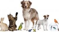 Con el objetivo de promover una cultura de respeto y convivencia armónica entre personas y animales de compañía, Mars Petcare con su programaCiudad para las Mascotas, en conjunto con la […]