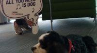 Se dio a conocer la llegada a México de la iniciativa de Nestlé Purina, llamada Pets at Work, en donde sus empleados pueden llevar a sus oficinas, por un día […]