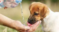 La temporada de calor más intensa del año ha llegado a México, y así como las personas sufren de afectaciones por el calor intenso, las mascotas pueden llegar a padecer […]