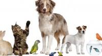 En días recientes se dio a conocer que humanizar a las mascotas, especialmente a los perros y gatos, (los llamados perrhijos o gatihijos) puede ser una señal de trastorno psicológico. […]