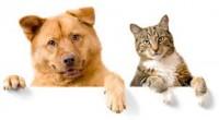Se estima que en México el 92% de las personas que reciben terapia asistida con animales obtiene mejoría en su salud, debido a la interacción con animales de compañía, de […]
