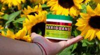 Se dio a conocer la llegada al mercado mexicano del producto Mariguanol, como una nueva solución ante los dolores musculares, y dicha presentación se realizó en una clase de box, […]