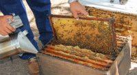 El proyecto A de abeja, busca generar un vínculo entre las personas y las abejas, por ello, Alba cocina local, restaurante enfocado en crear experiencias culinarias a partir de ingredientes […]