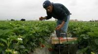 El procurador agrario Cruz López Aguilar refrendo el compromiso ineludible e inaplazable, expuesto en agosto en California, EU, de generar esfuerzos compartidos para acercar los programas y servicios que contribuyan […]