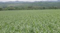 Diversas organizaciones de la sociedad civil destacaron al estado de Yucatán, ubicado en el Golfo de México, como un actor clave para transitar hacia la agricultura ecológica a través de […]