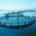 El Gobierno de México promueve el aumento de la producción acuícola nacional, prioritariamente en el sur-sureste del país y Golfo de México, mediante el apoyo para la adquisición de equipamiento […]