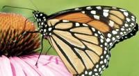 Uno de los fenómenos más espectaculares de la Naturaleza es la migración de grandes poblaciones de animales entre regiones geográficas distantes. Buenos ejemplos son el viaje de la Mariposa Monarca […]