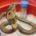 El Instituto de Biotecnología (IBt) de la Universidad Nacional Autónoma de México (UNAM), ubicado en el estado de Morelos, dio a conocer que desarrolló un antiveneno para tratar la picadura […]