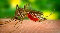 Se dio a conocer por parte del Consejo Nacional de Ciencia y Tecnología (Conacyt) que se han hecho uso de avanzadas técnicas avanzadas de modificación genética, por parte de investigadores […]