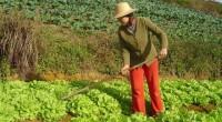 Las micro, pequeñas y medianas empresas (MIPYMES) rurales y pequeños productores agrícolas en zonas marginadas del país podrán acceder a oportunidades de financiamiento a través de un proyecto del Banco […]