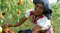 El Instituto Nacional de la Mujeres (Inmujeres), que preside Lorena Cruz Sánchez, hizo un llamado a las instituciones para lograr sinergia interinstitucional que genere políticas públicas integrales de Cambio Climático […]