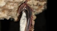 Con el objetivo de preservar las especies de murciélagos mexicanos, Liliana Trujillo, integrante del Instituto de Ecología (Inecol), ubicado en Xalapa, Veracruz, ha emprendido una investigación dirigida a ampliar el […]