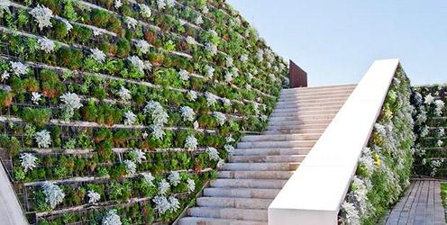 Buscan multiplicar los muros y azoteas verdes en cdmx mi for Plantas para muros verdes verticales