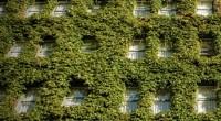 En diversos edificios de México se ha dado la creación de muros y azoteas verdes, que son una forma urbana de mitigar el impacto del Cambio Climático, as su vez, […]