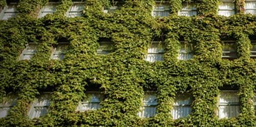 Crean muros verdes e inteligentes en m xico mi for Muros verdes en mexico