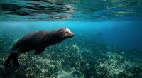 Derivado del cierre temporal a las actividades de nado con lobo marinoen la zona de «Los Islotes» del Parque Nacional Zona Marina Archipiélago de Espíritu Santo, se incrementó notablemente la […]