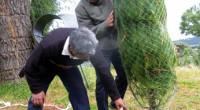250 mil árboles navideños Para la próxima temporada navideña, los productores forestales del Edomex pondrán a la venta 250 mil ejemplares de Arboles de Navidad, por lo que se estima […]
