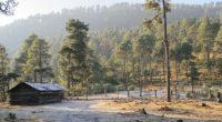 De 2014 a 2016 la Comisión Nacional Forestal (CONAFOR), como parte del Programa Especial de Restauración Nevado de Toluca, ha realizado trabajos de reconversión productiva que apoya el establecimiento de […]