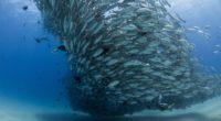 Los océanos del mundo padecen de una alta incomprensión de la humanidad, desembocando en la alta contaminación que se le provoca a este ecosistema; muestra de ello son las islas […]