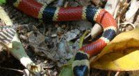Investigadores mexicanos diseñan una neurotoxina capaz de desarrollar o mejorar antivenenos para tratar las mordeduras de elápidos (serpientes de coral americanas, cobras asiáticas y mambas africanas) con mayor efectividad y […]
