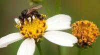 En años recientes, ha cobrado fuerza el nivel de alarma registrado en torno al descenso de la población de abejas en México y a nivel mundial, el cual supone una […]