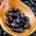 """El Instituto Nacional de Investigaciones Forestales, Agrícolas y Pecuarias (INIFAP), organismo del gobierno mexicano, presentó resultados del proyecto de investigación """"Mejoramiento de frijol negro, para tolerancia a sequía, suelos ácidos […]"""