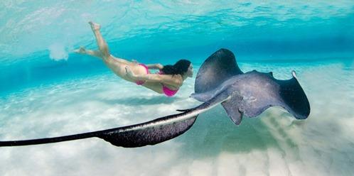 México- Anuncian el gran festival Kaaboo Cayman para febrero de 2019 Grand Cayman, Islas Caimán.- La empresa Kaaboo anunció el repertorio de artistas que formarán parte del evento de 2019 […]